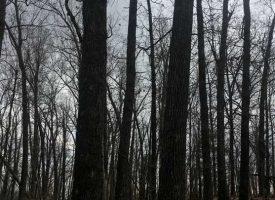 80 +/- Acres, Deer Hunters Paradise, Lots of Deer and Turkey, Fulton County, AR